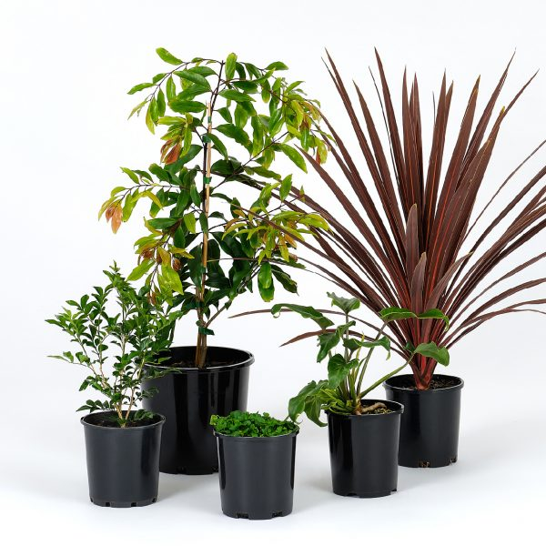 Basic Tropical Garden