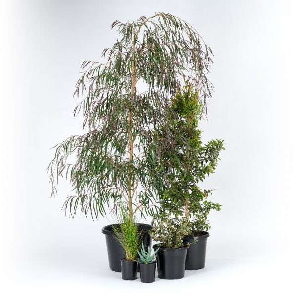 Premium Coastal Plants