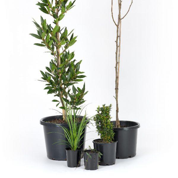 Premium Formal Plants