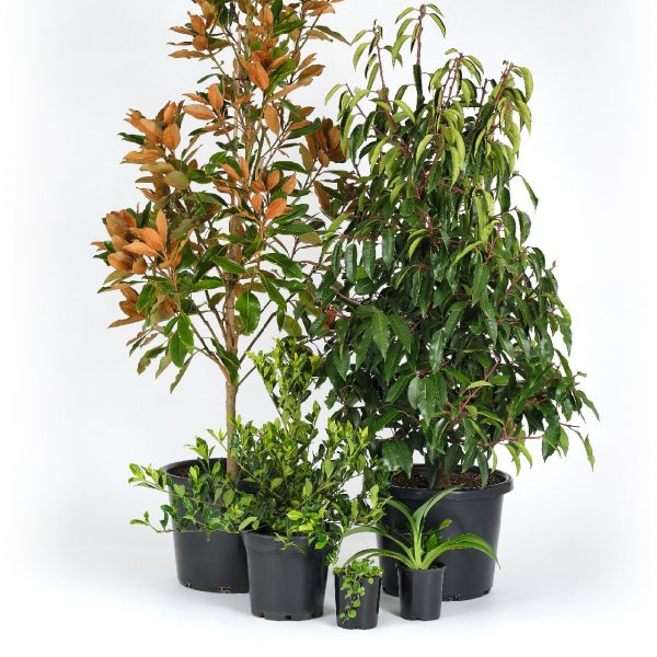 Premium Modern Plants