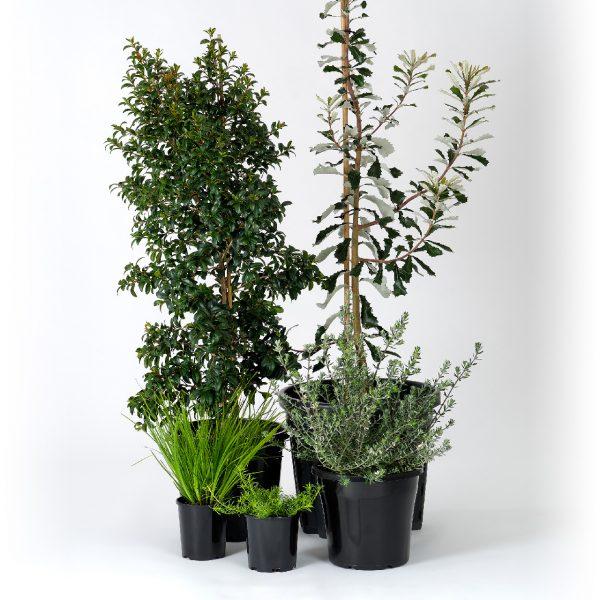 Premium Native Garden