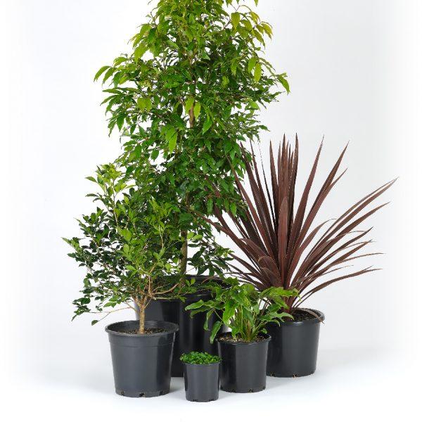 Premium Tropical Garden L