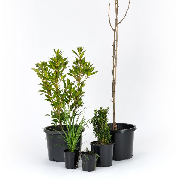 Standard Formal Plants