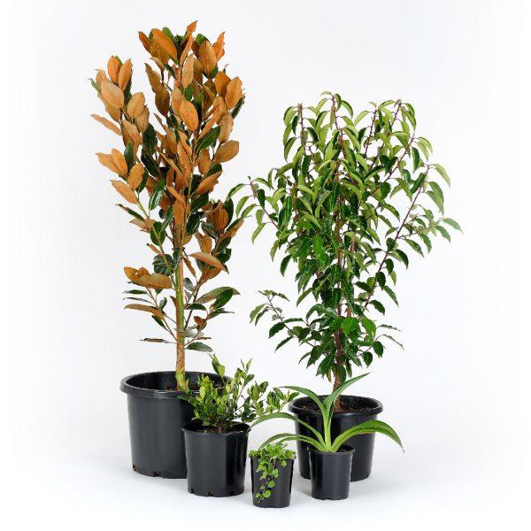 Standard Modern Plants