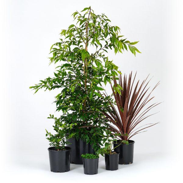 Standard Tropical Garden