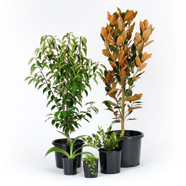 Modern Garden Packages